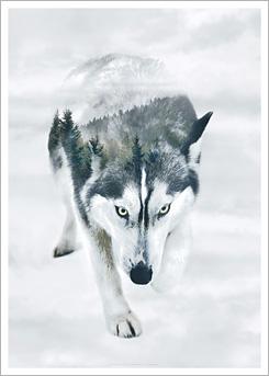 Faunascapes Art Print Siberian Husky
