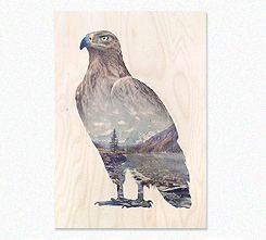 Faunascapes Plywood Print Brown Eagle