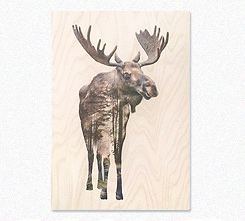 Faunascapes Plywood Print Moose