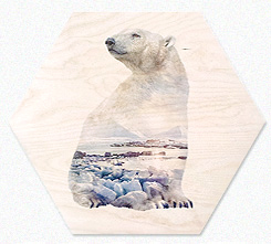 Faunascapes Plywood Print Polar Bear