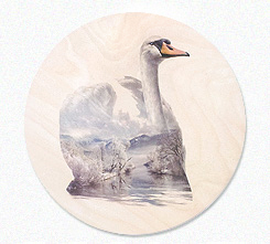 Faunascapes Plywood Print Swan