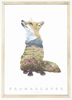 Faunascapes Poster Print Fox