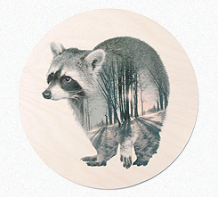 Faunascapes Plywood Print Raccoon