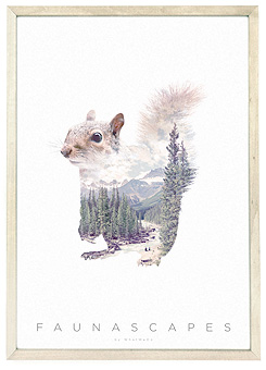 Faunascapes Poster Print Squirrel