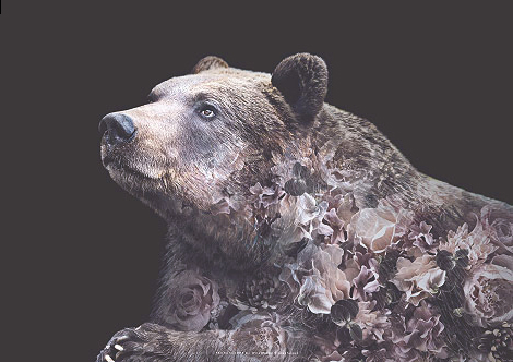 Faunascapes Flower Portrait Grizzly Bear