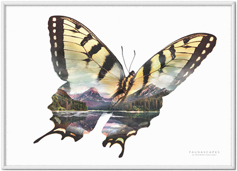 Faunascapes Butterflies Golden Mountain Lake