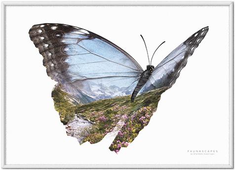 Faunascapes Butterflies Wanderlust Mountain