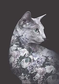 Faunascapes Silver Cat Flower Portrait Art Print