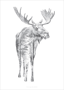 Faunascapes Pencil Drawing Moose