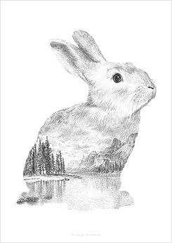 Faunascapes Pencil Drawing Rabbit